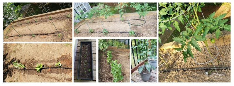 Vegetable Garden - Before and Now